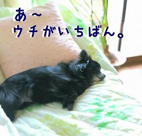 2016-05-01_13_49275.jpg