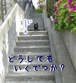 2016-05-01_14_49286.jpg