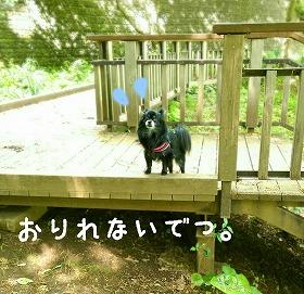 2016-05-01_15_49310.jpg