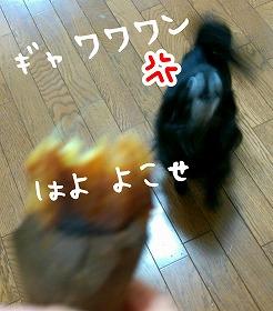 2016-05-03_21_49501.jpg