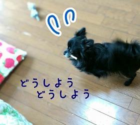 2016-05-05_23_49550.jpg