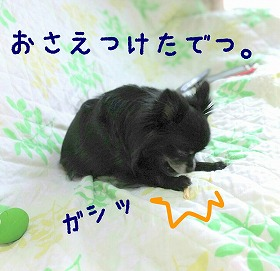 2016-05-05_23_49551.jpg