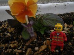 【写真】パンジーのプランターに置かれたロボットの人形