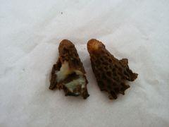【写真】女王蜂の幼虫が入っている巣穴のかけら