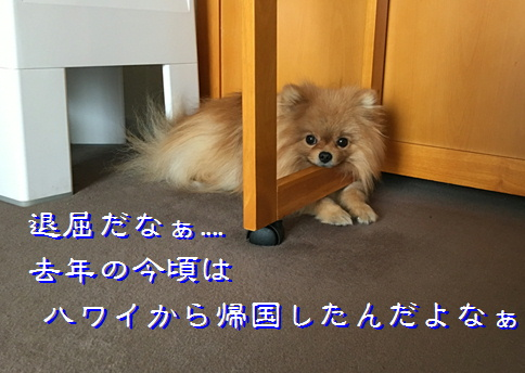 blog20160407-1.jpg