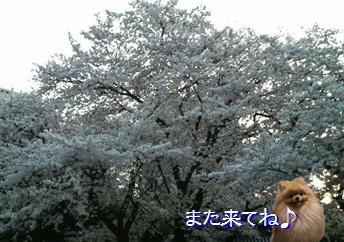 blog20160407-9a.jpg