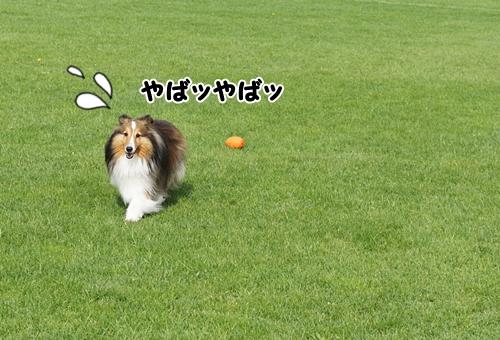 ボール11
