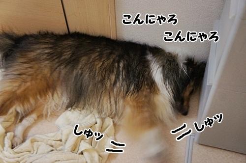 シャンプー4