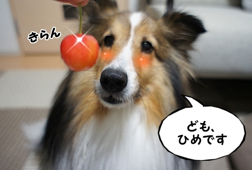 さくらんぼ1