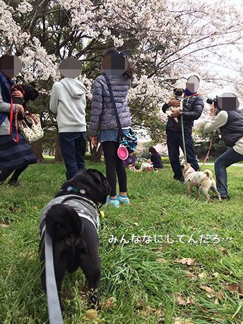 桜と記念写真