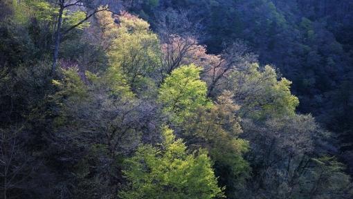 5775滝山峡1641511