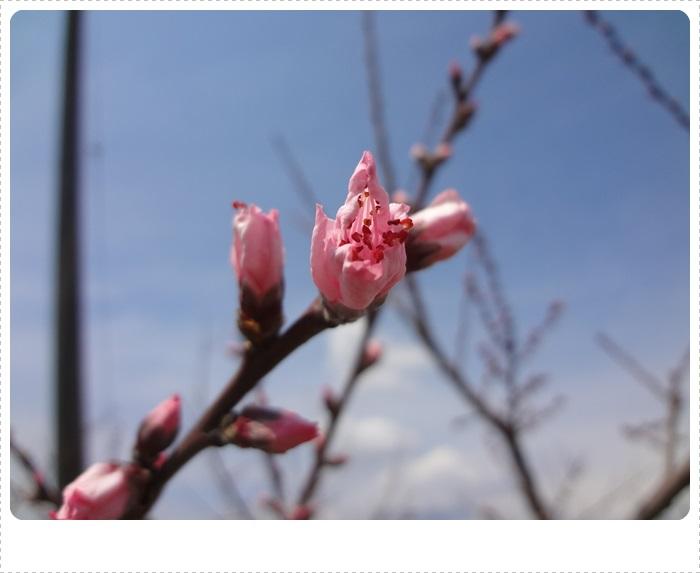 春散策DSC07694
