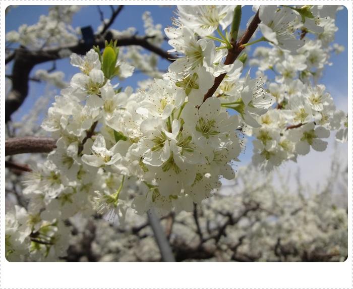 春散策DSC07695