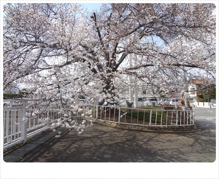 春散策DSC07699
