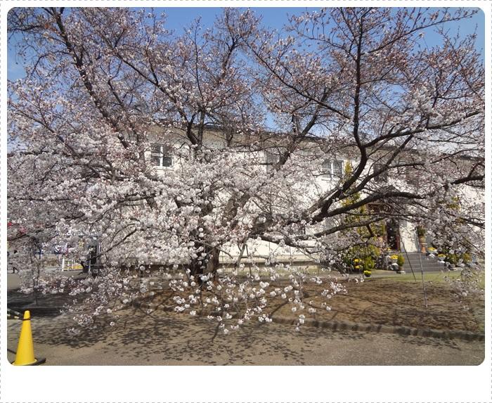 春散策DSC07698