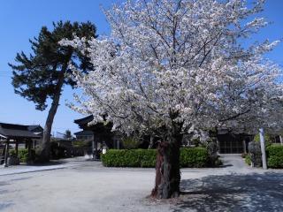 2015年04月25日 龍覚寺06