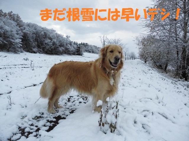 CIMG2748_P.jpg