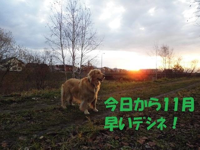 CIMG2750_P.jpg
