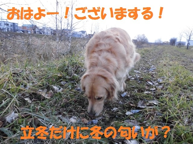 CIMG2773_P.jpg