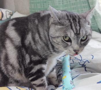 猫とネズミ キャットニップ1