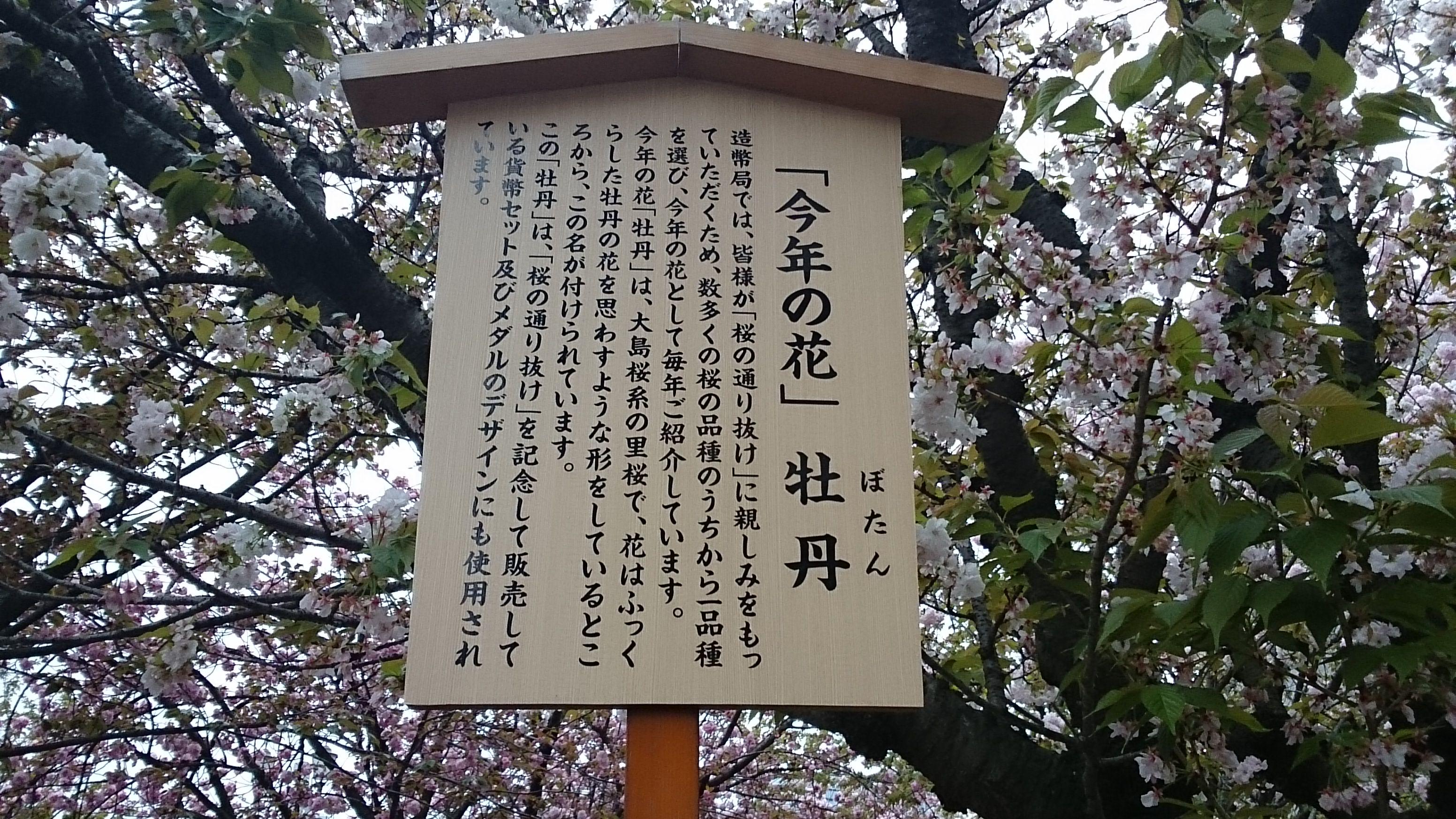 今年の花・牡丹/名札あり