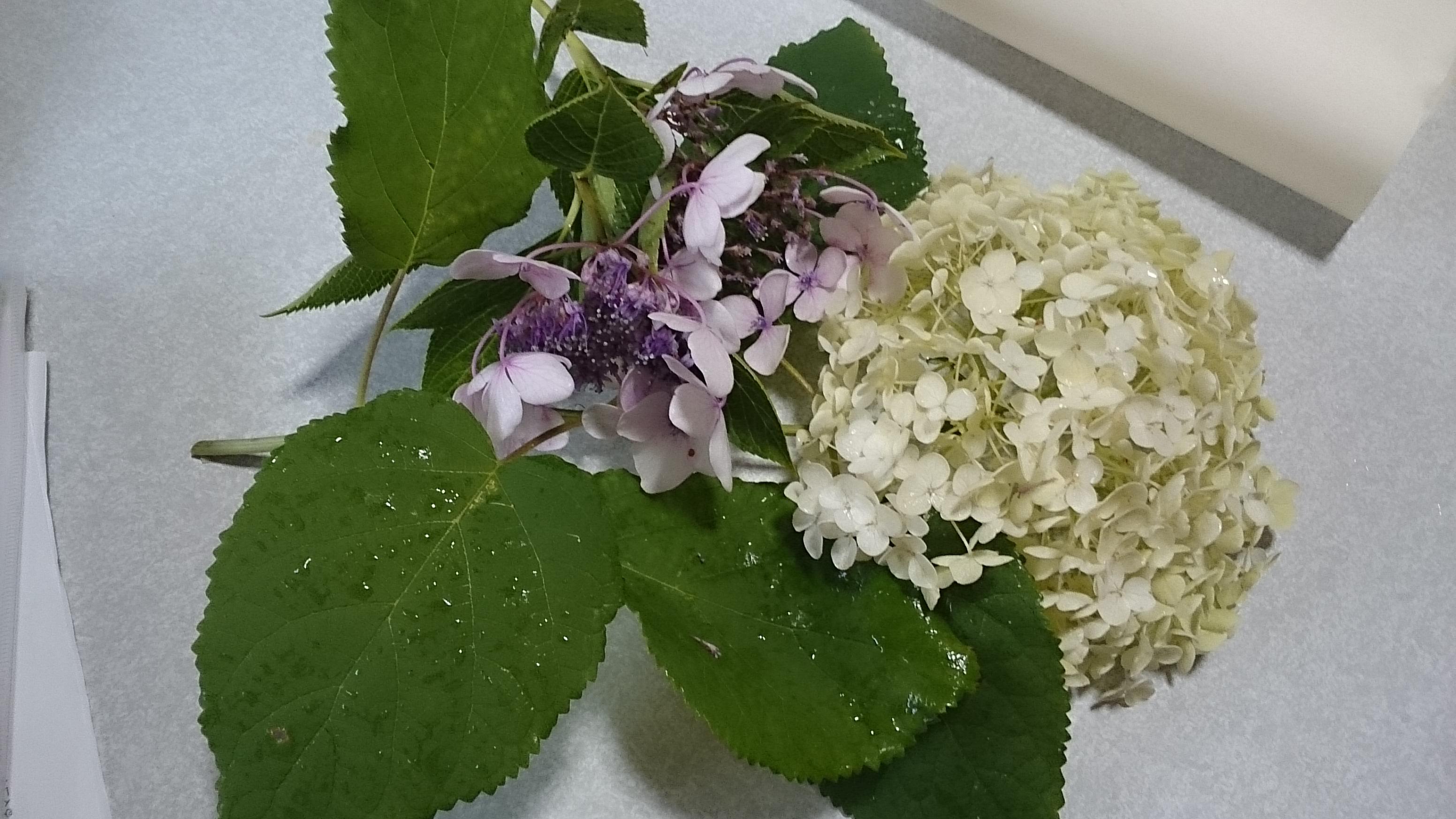 紫陽花の材料