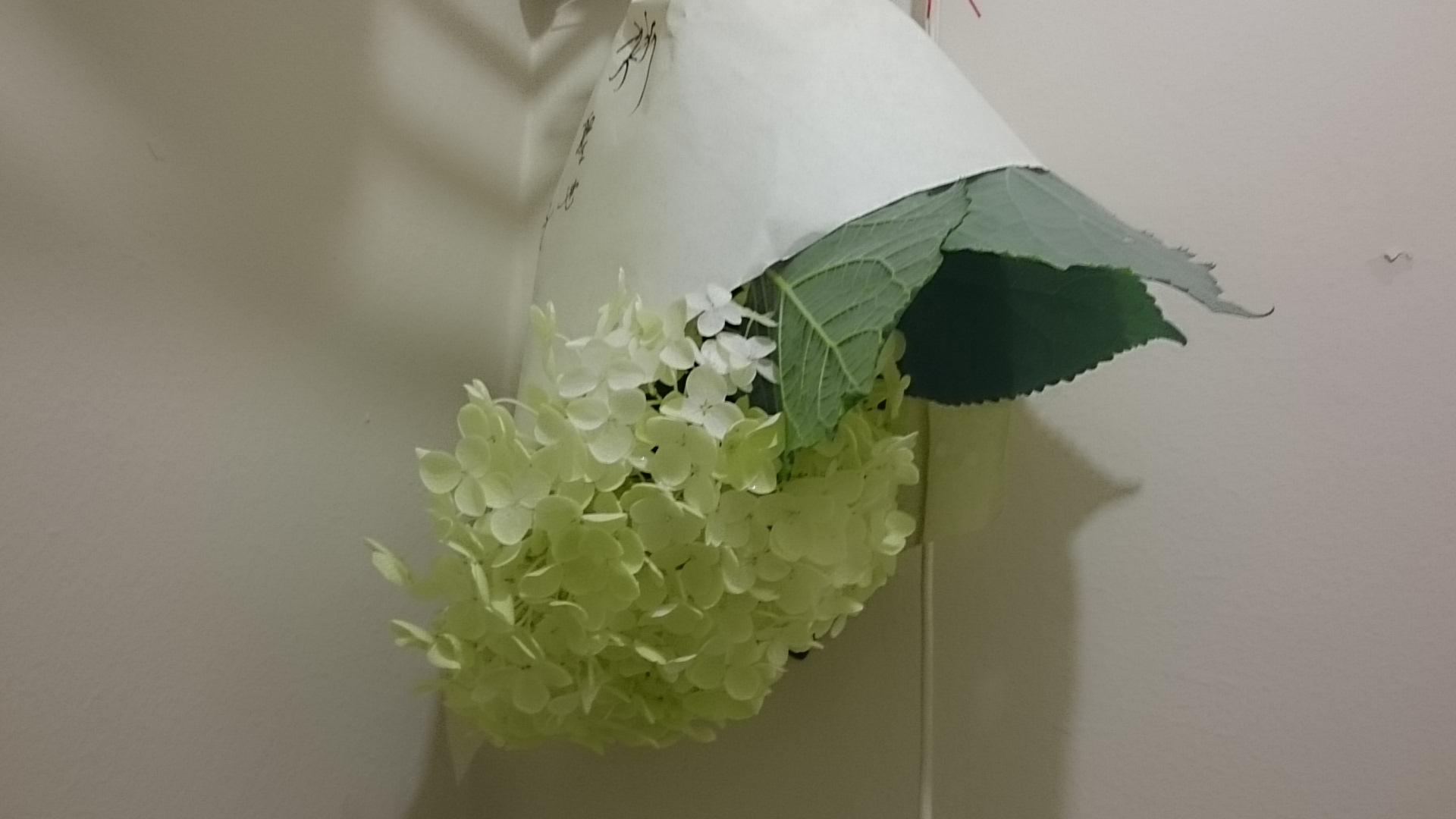 トイレに吊るす/紫陽花
