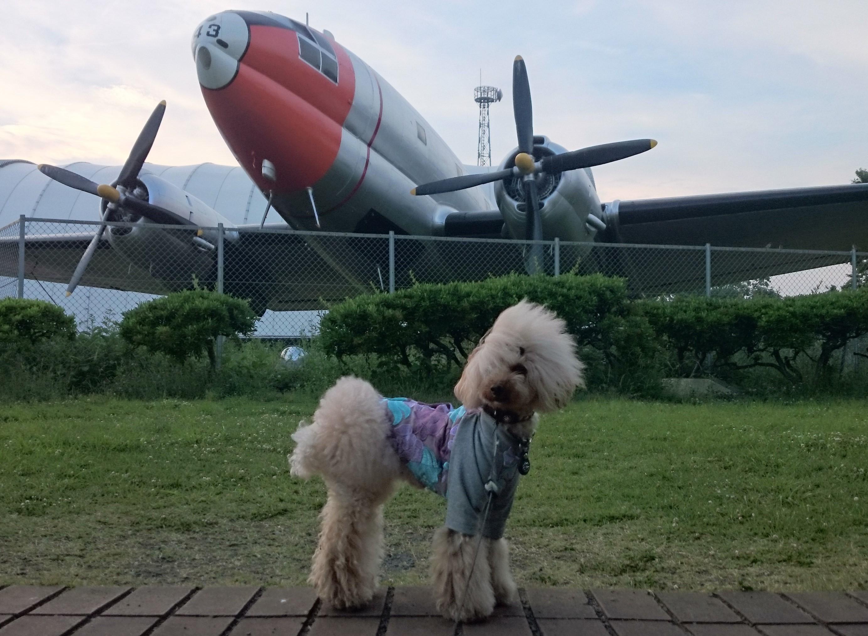 れまにす in 航空公園