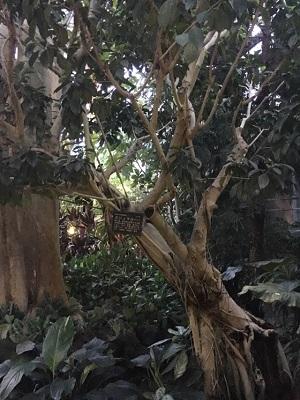 植物園2016699