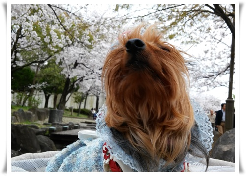 4月3日よたろうちゃんとIMG00748-20160403