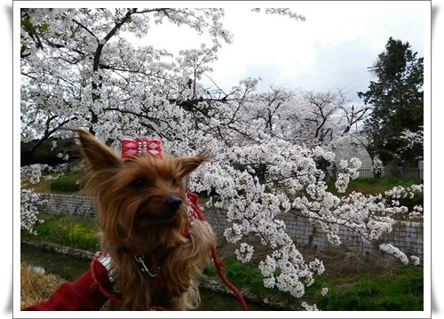 4月3日よたろうちゃんとIMG00760-20160403