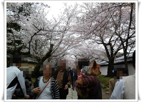 京都IMG00767-20160406