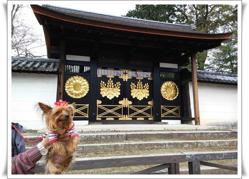 京都IMG00769-20160406