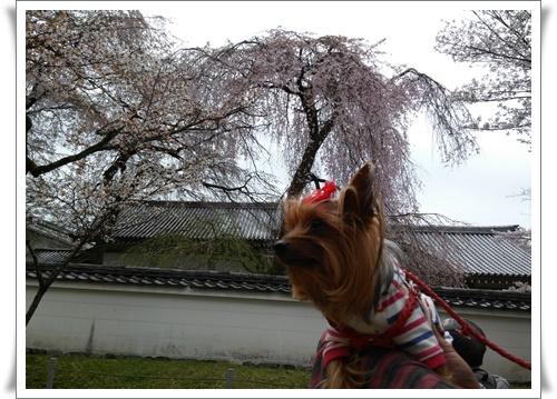 京都IMG00770-20160406
