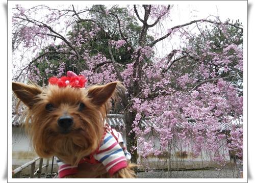京都IMG00775-20160406
