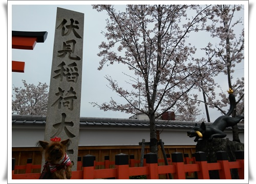 京都IMG00777-20160406