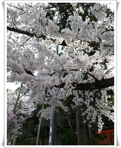 京都IMG00797-20160406