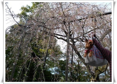京都IMG00798-20160406