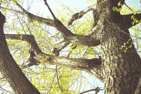 木々に囲まれて