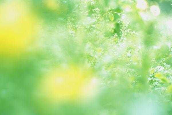 緑色の宝石箱