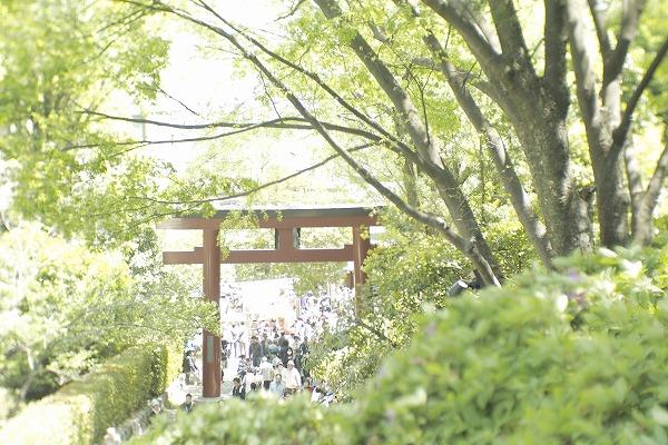 つつじ祭り☆根津神社