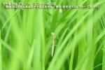 059 s-DSC_0221 039