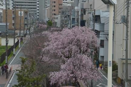 2016-04-02_47.jpg