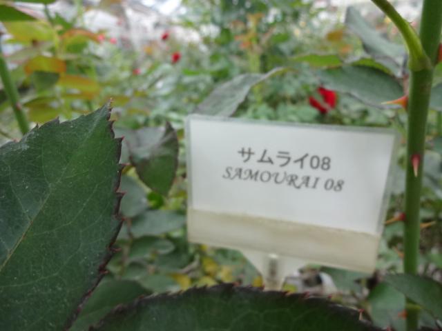 H28410 (105)