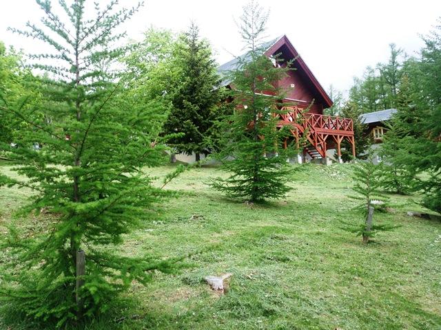コテージの植林カラマツ2