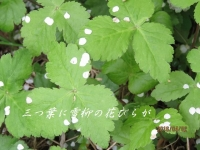 IMG_1120B.jpg