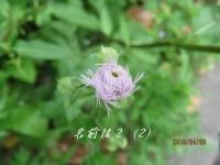 IMG_1181B.jpg