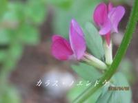 IMG_1188B.jpg