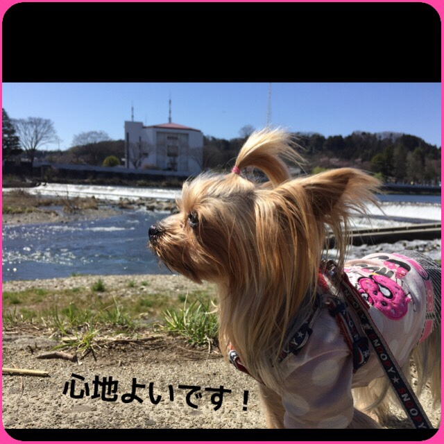 fc2blog_20160405205004f7b.jpg