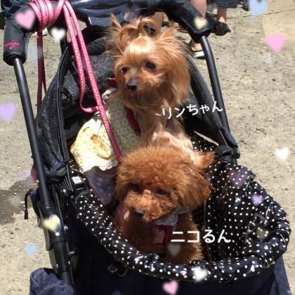 fc2blog_2016062709413411f.jpg